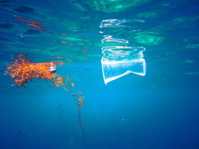 Blog | Prevent Marine Litter Now!